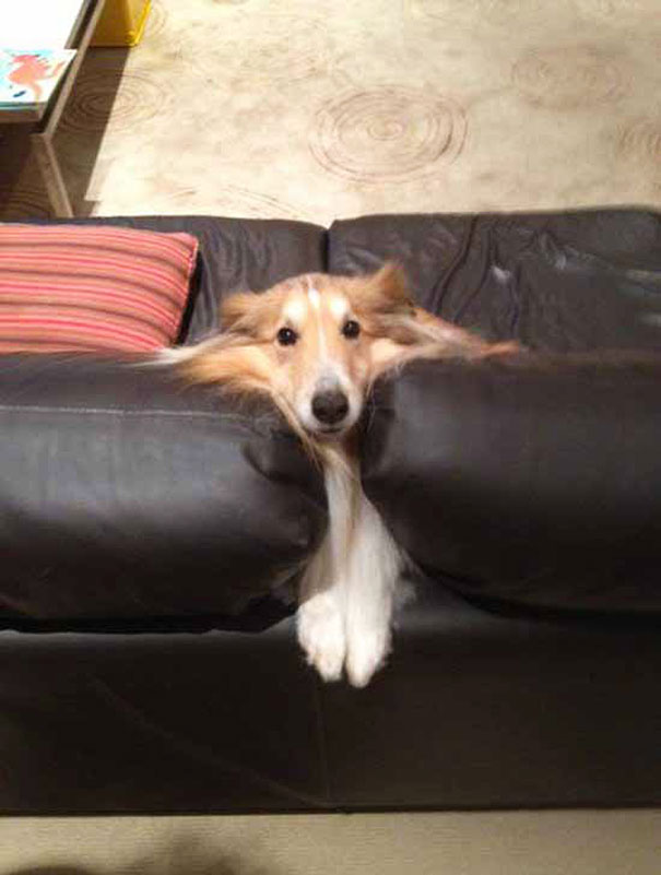 funny-cats-dogs-stuck-furniture-4