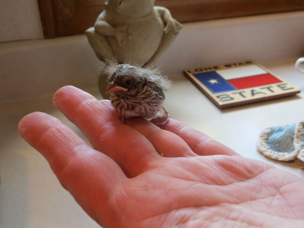 rescued_songbird_09