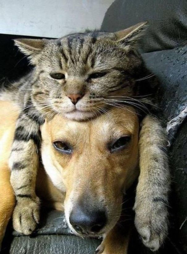 Resultado de imagen para gatos y perros confundidos