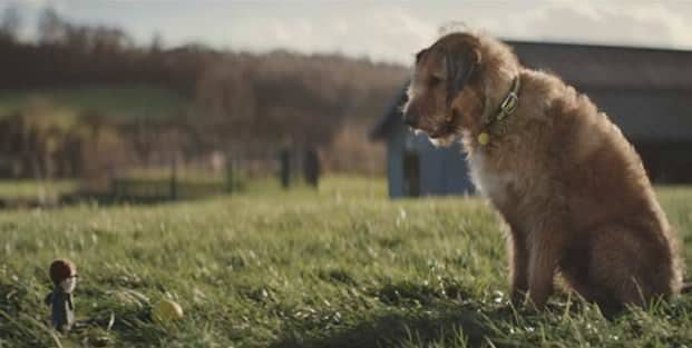 Dogs Trust – YouTube