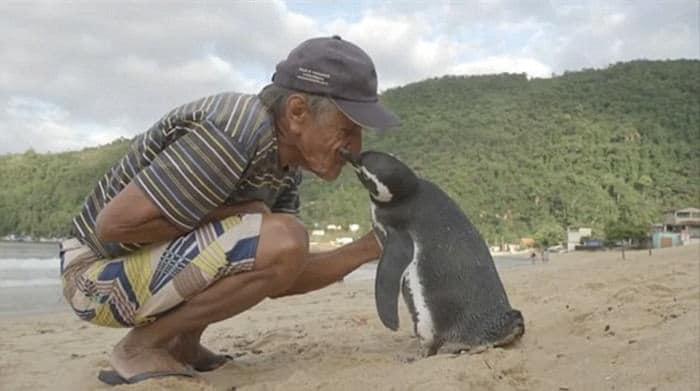 Un_pingüino_nada_8,000_kilómetros-01
