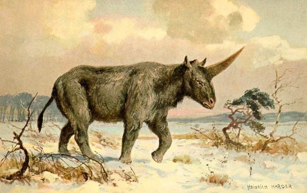Siberian unicorn. Heinrich Harder / Via Wikimedia Commons