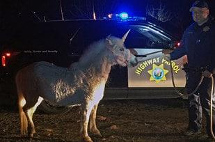 Runaway unicorn  Officer Justin Perry / Via AP