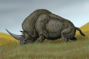 Elasmotherium sibiricum  Via en.wikipedia.org