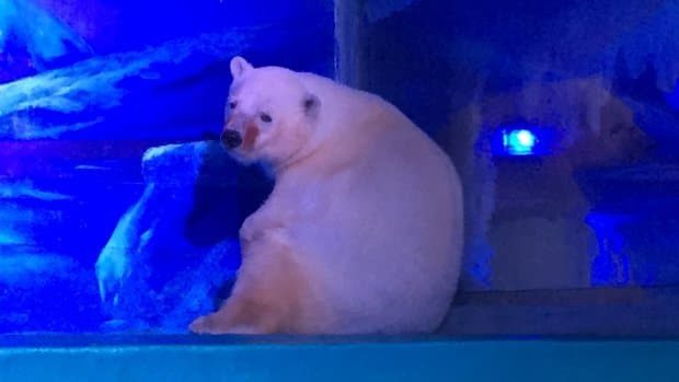 As of Monday, more than 270,000 people had signed Animals Asia's petition, calling for the closure of Grandview Aquarium at Grandview shopping centre in Guangzhou, China. (Animals Asia)