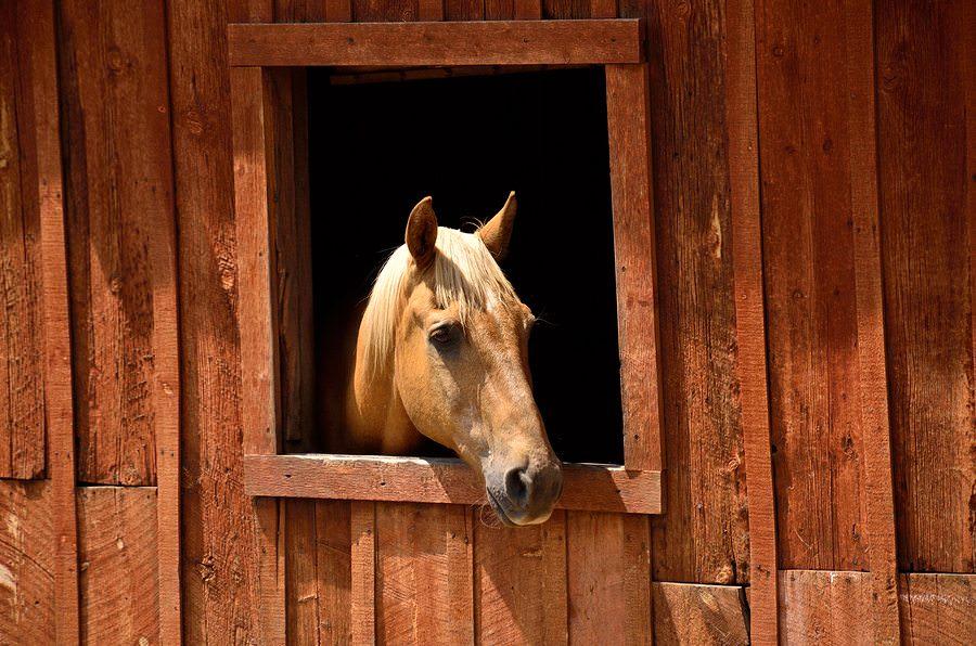 Estos_11_caballos_solo_intentan-02
