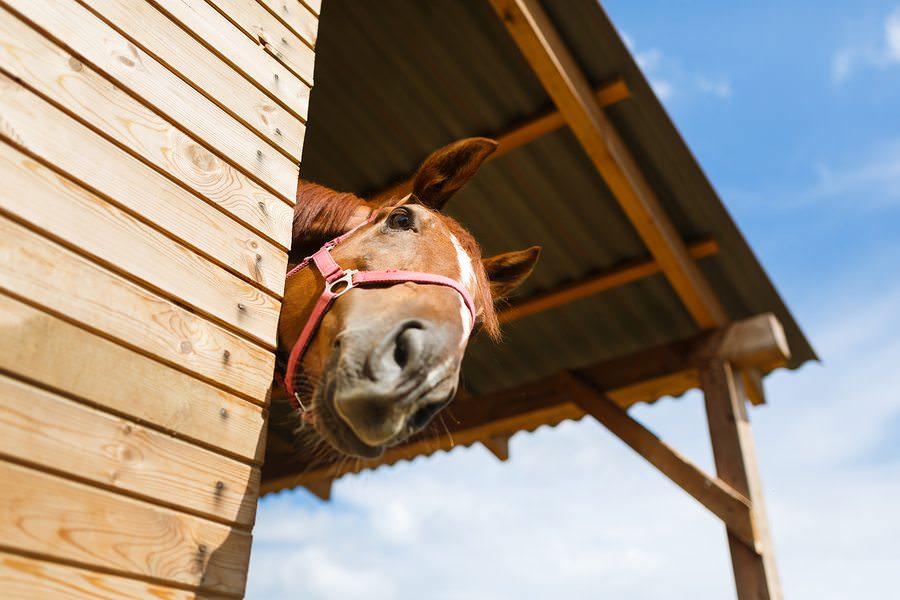 Estos_11_caballos_solo_intentan-04
