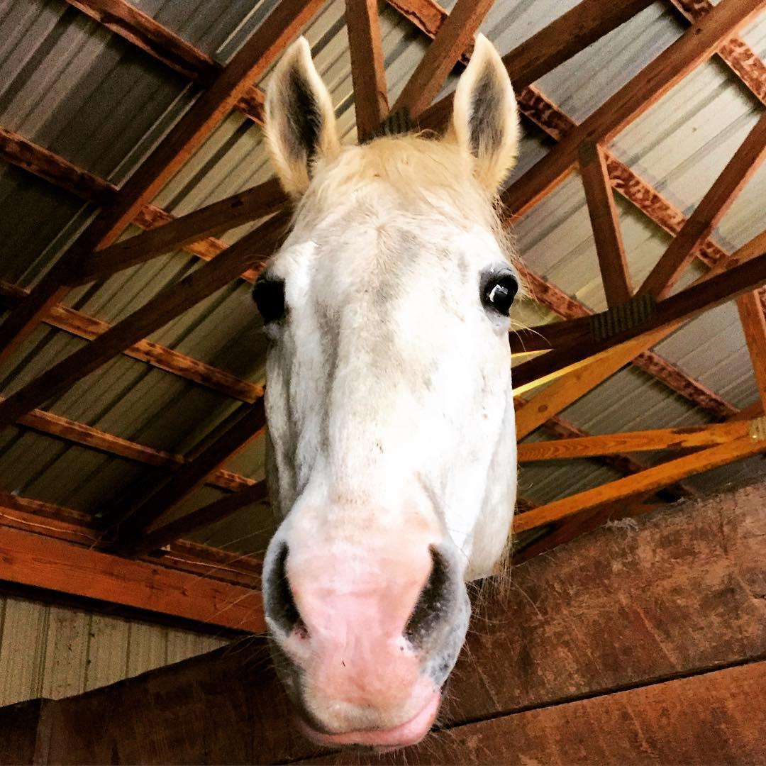 Estos_11_caballos_solo_intentan-05
