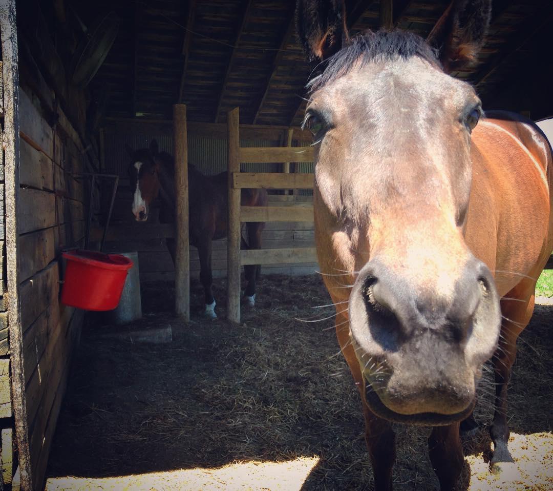 Estos_11_caballos_solo_intentan-06