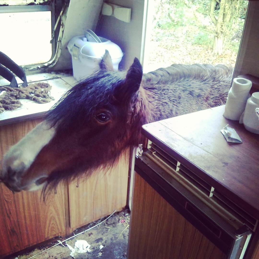 Estos_11_caballos_solo_intentan-07