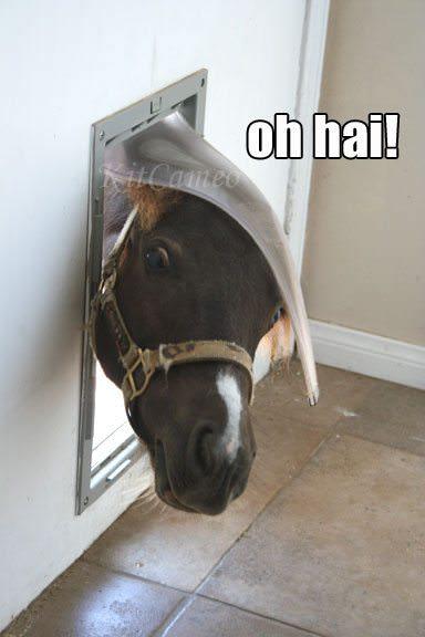 Estos_11_caballos_solo_intentan-08