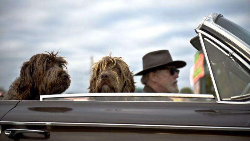 las mejores razas de perros 01